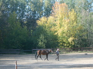 Животные_1. Захарово, на конном дворе.