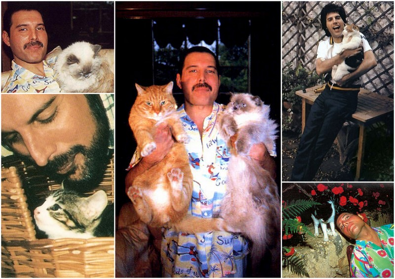 Фредди Меркьюри с кошкой