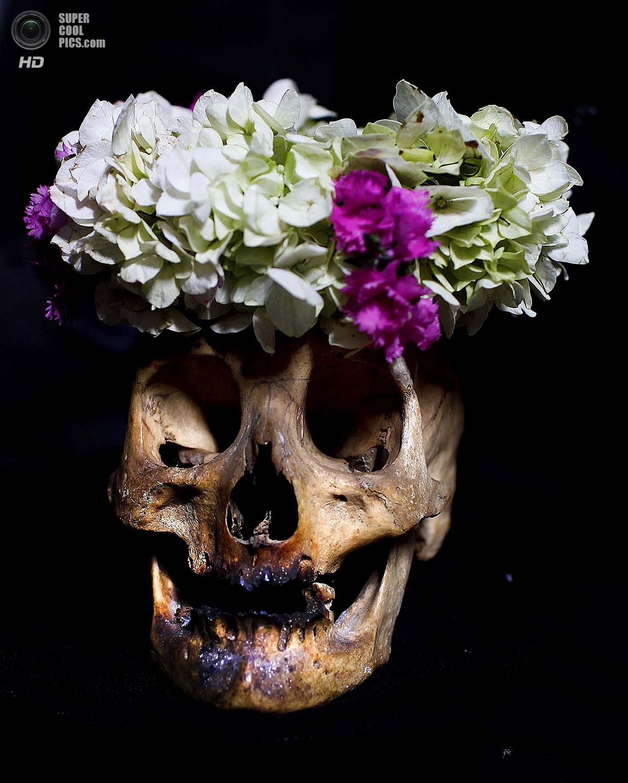 День черепов (12 фото)