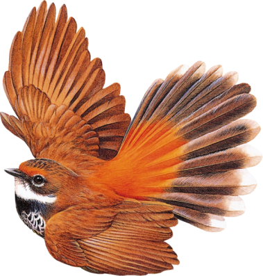 Bird12_dhedey.png