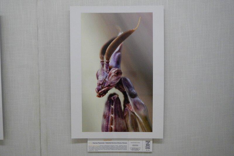 Контакт. Надежда Муравьева. Портрет богомола. На фестивале дикой природы Золотая Черепаха