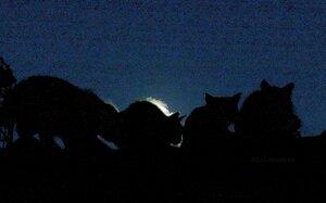давай с тобой полаем при луне видно