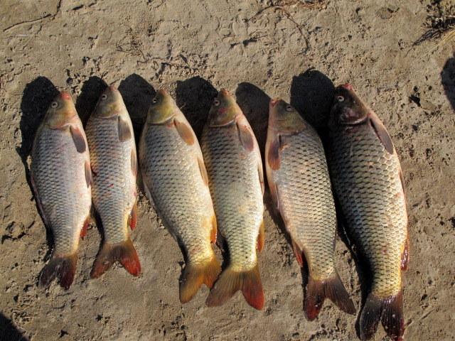 лен на рыбалку