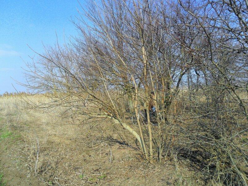 В лесу весеннем ... SAM_5818.JPG