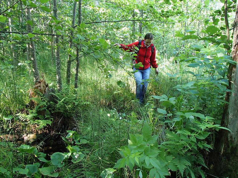 заболоченный лес около озера Вялье