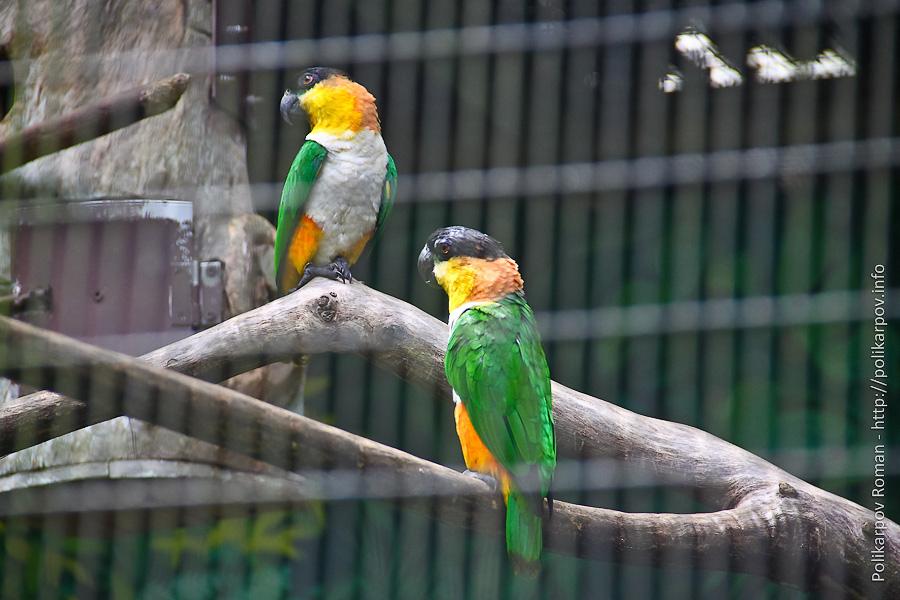 0 c4fb0 2d1590c6 orig Парк птиц Jurong в Сингапуре