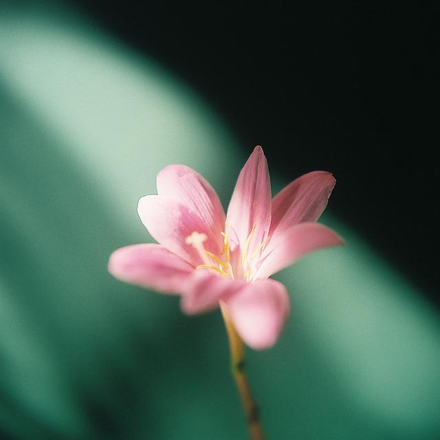 Send no flowers, Kumiko Sekiguchi2_1280.jpg