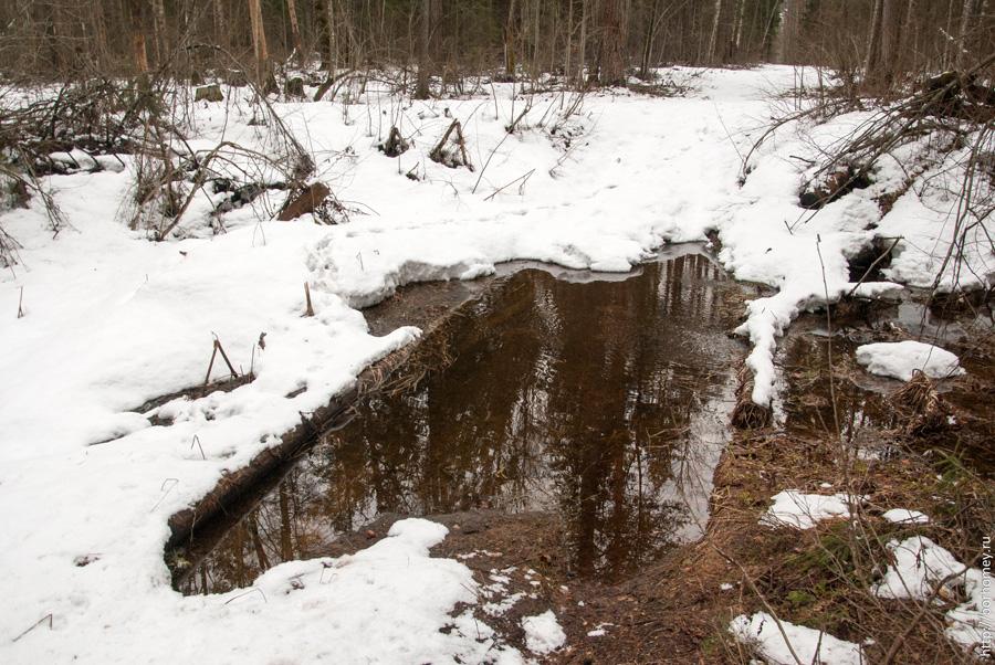 полноводный лесной ручей