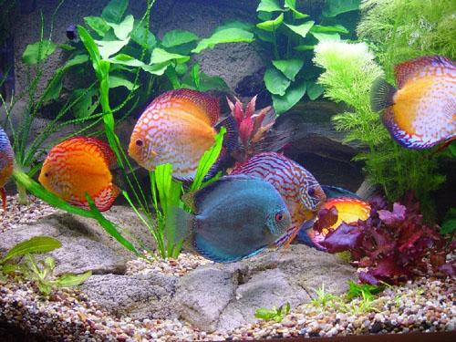 akvariumnyh-rybok.jpg