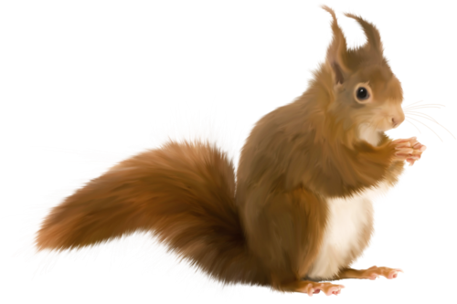 priss_flutteringleaves_squirrel4.png