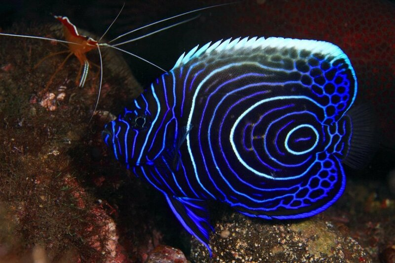 Как выглядят рыбы
