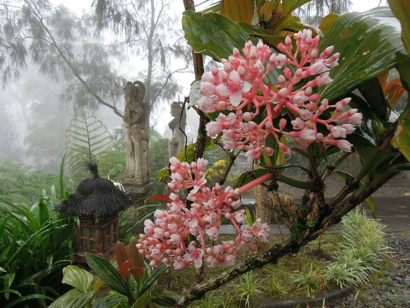 Индонезия, о. Бали. Экзотические растения