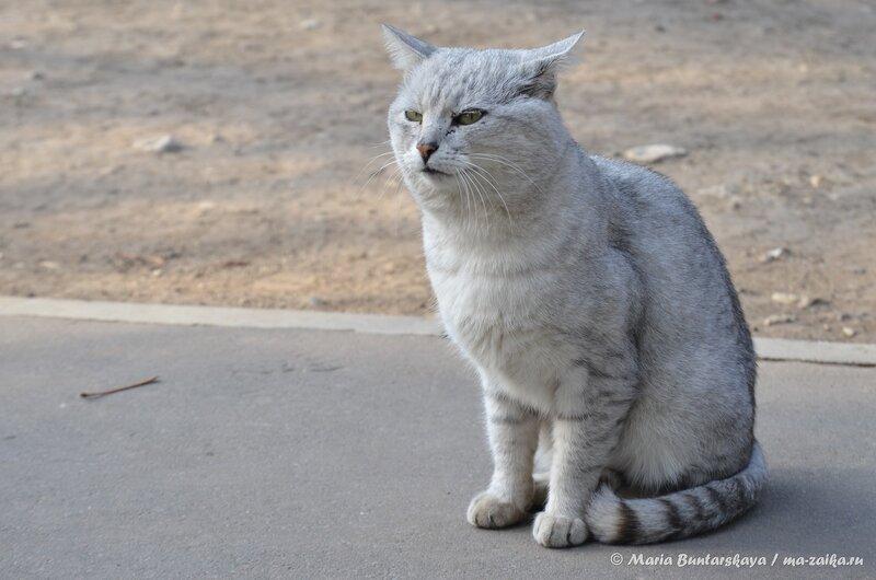 Кошак, Саратов, 30 октября 2014 года