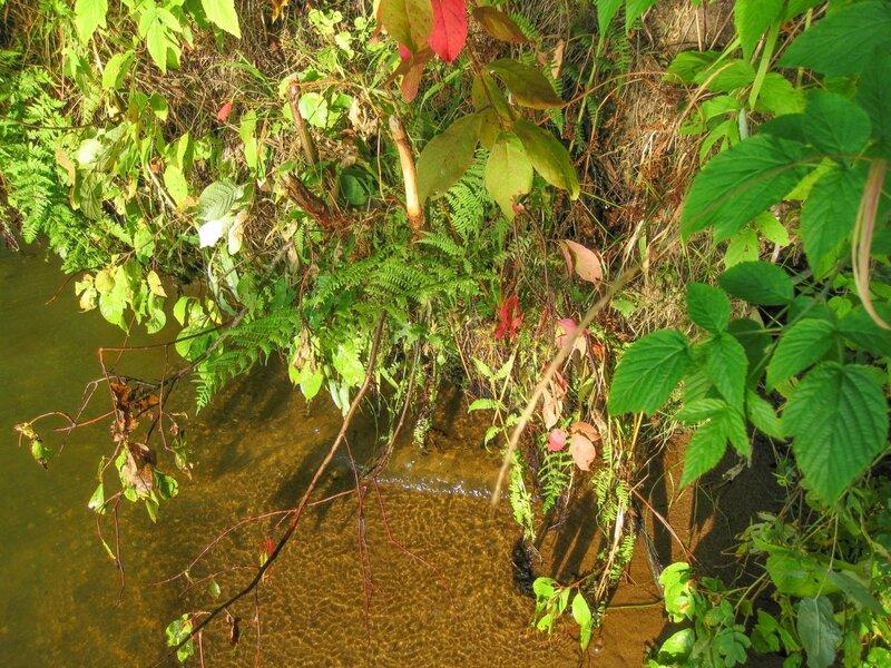 Прибрежная растительность, Пяловское водохранилище