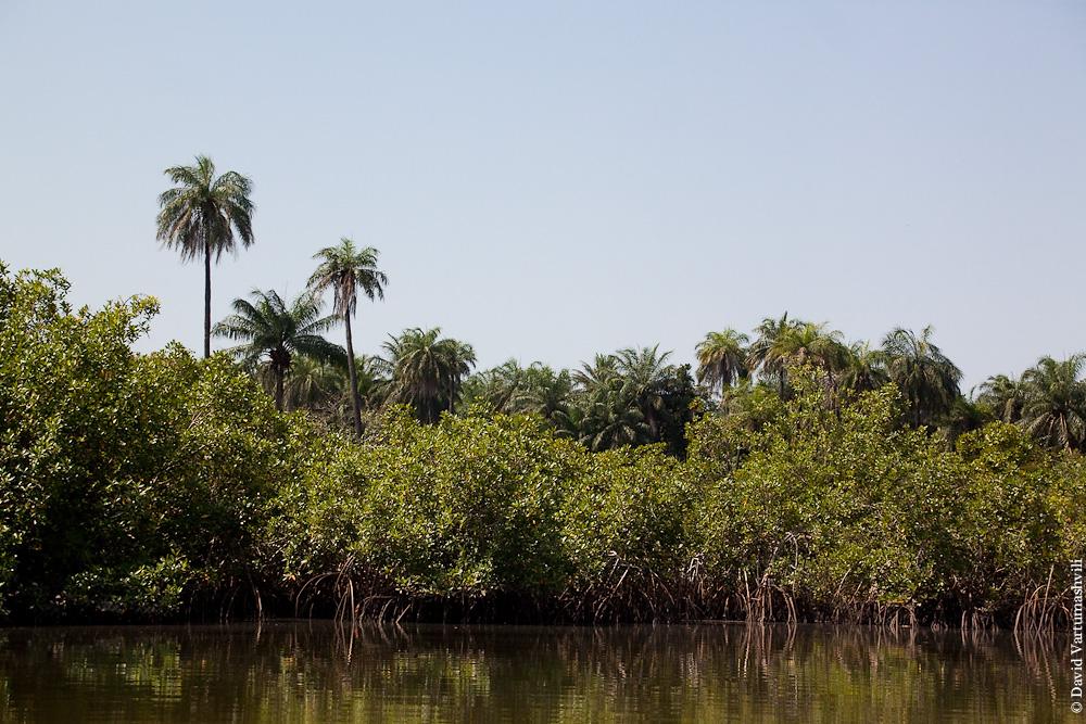 Гамбия, заповедник Макасуту