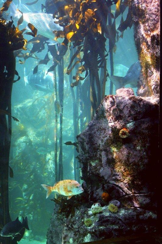 В подводном лесу