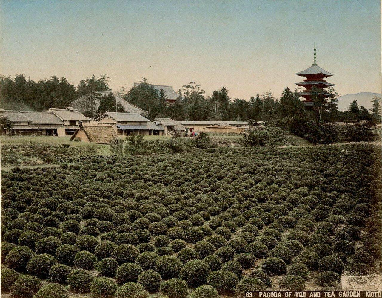 Киото. Пагода Тодзи и чайный сад