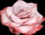 Vintage_Roses_Lilas_el (44).png