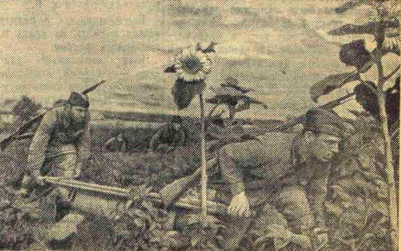 «Известия», 20 августа 1941 года, медицина в ВОВ