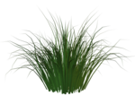 R11 - Garden Plant 2014 - 118.png