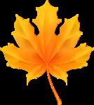 Maple leaf, vector [преобразованный].png