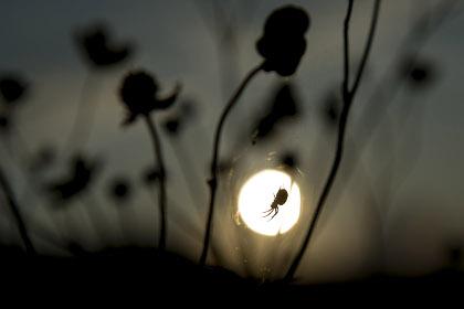 Через рубец, оставшийся после операции, в австралийца залез паук