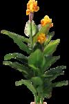 растение.png