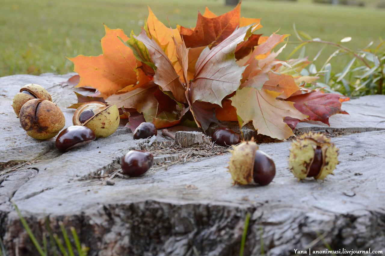 Гомельская осень