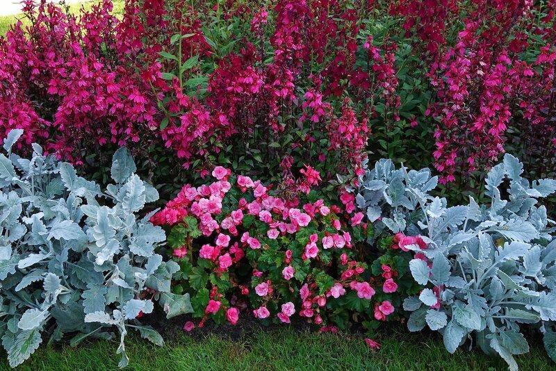 Цветы Екатерининского парка