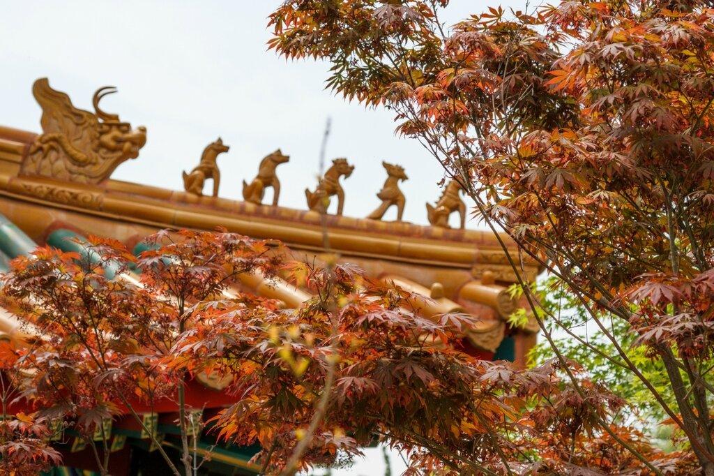 Красный клен и золотая крыша
