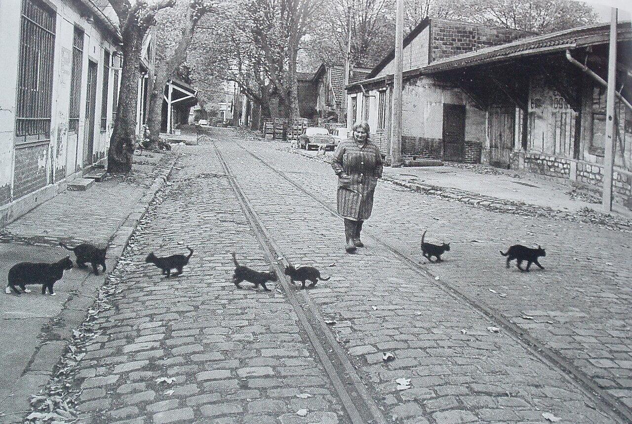 1974. Кошки Берси
