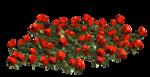 цветы (105).png
