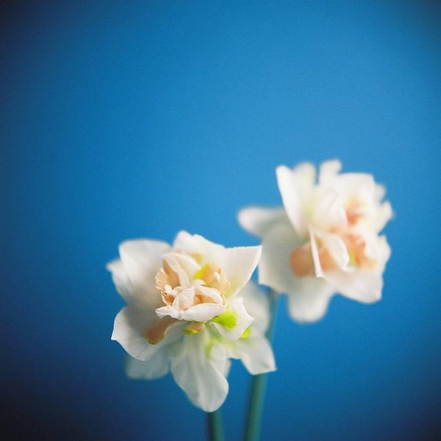 Send no flowers, Kumiko Sekiguchi0_1280.jpg