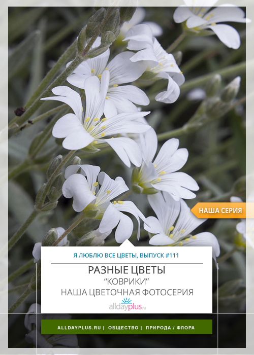 Я люблю все цветы, выпуск 111 | Разные цветы.