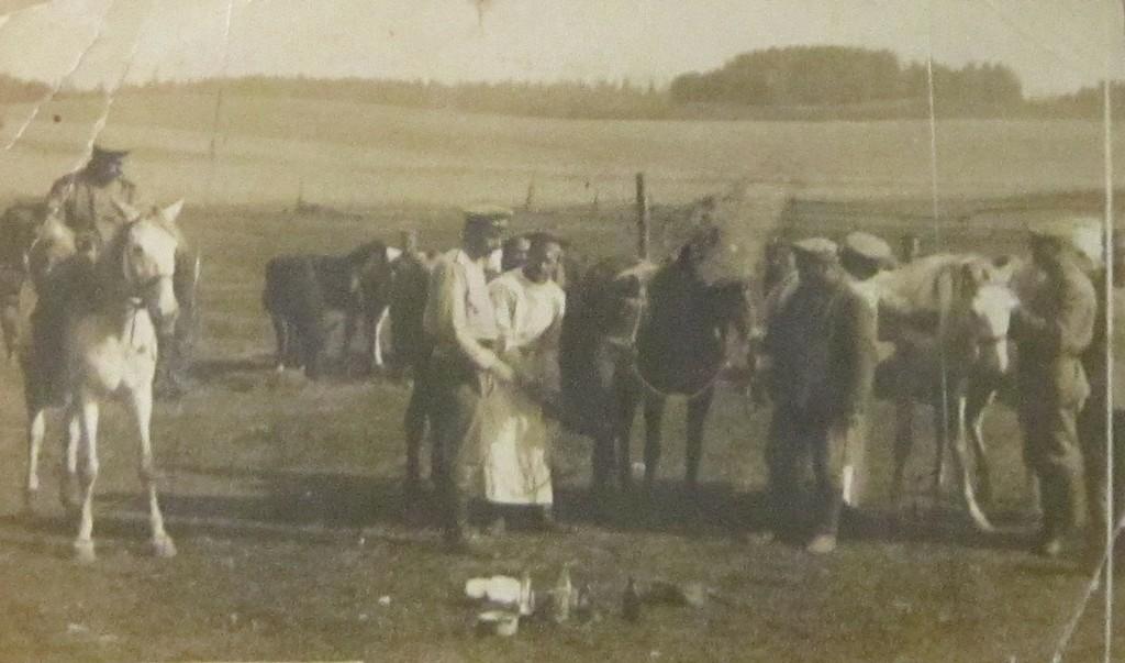 Лечение копыт у лошадей ветеринарной службой драгунского полка. 1916 год.
