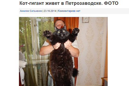 Семья из Петрозаводска вырастила кота-гиганта