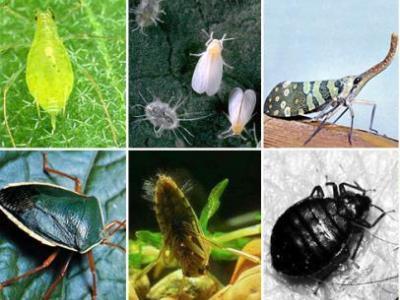 борьба с садовыми вредителями