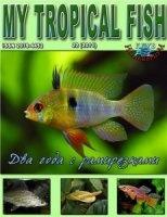 Книга My Tropical Fish №1-22 2006-2011 pdf 257Мб