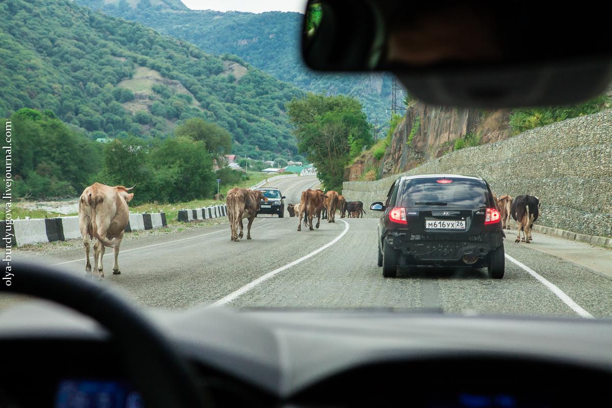 Путешествие на Домбай с Ford Focus