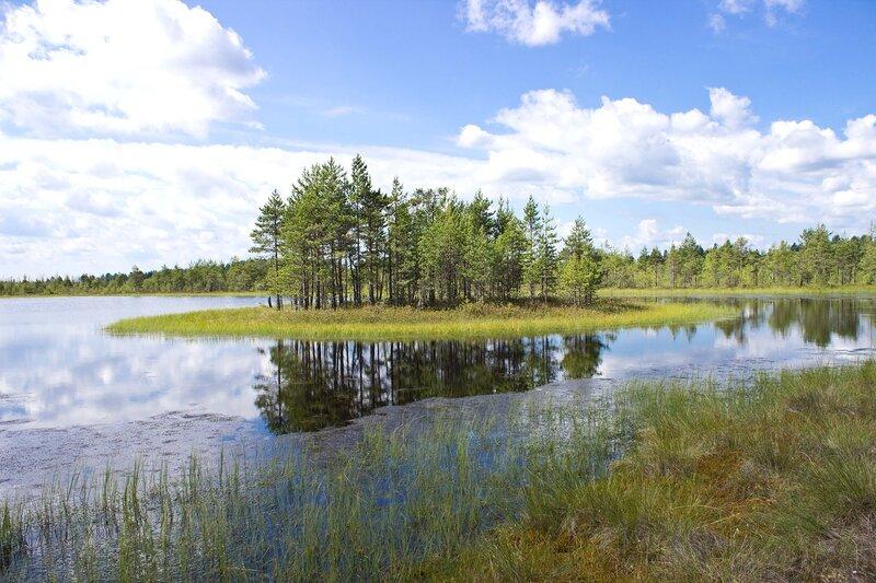 безымянное озерцо на мшинском болоте