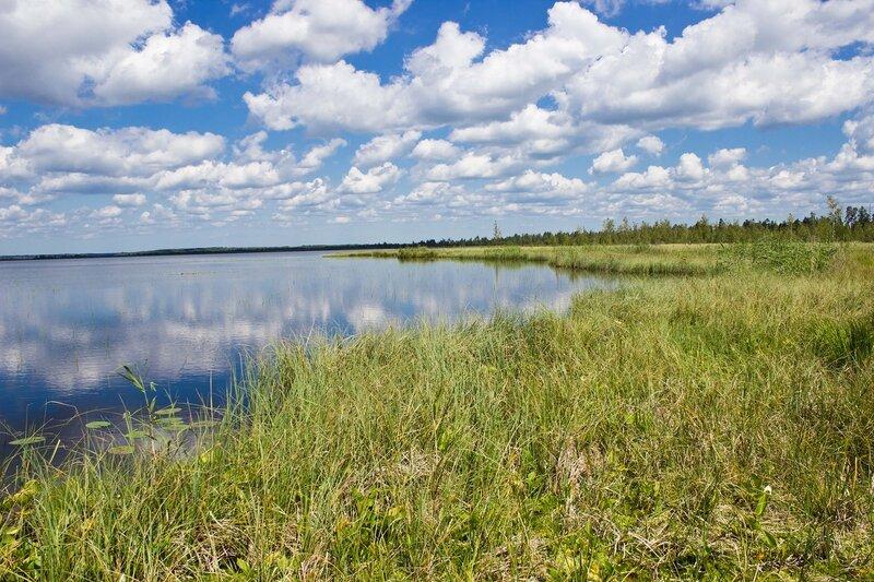 залив Комаринская заводь на озере Вялье