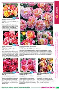 Розы Весна 2015! Новый каталог