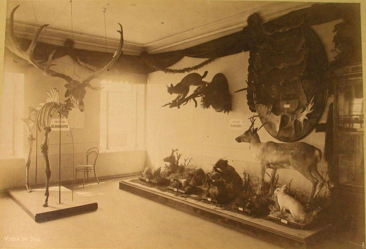 30. Вид части одного из залов музея Уральского общества любителей естествознания