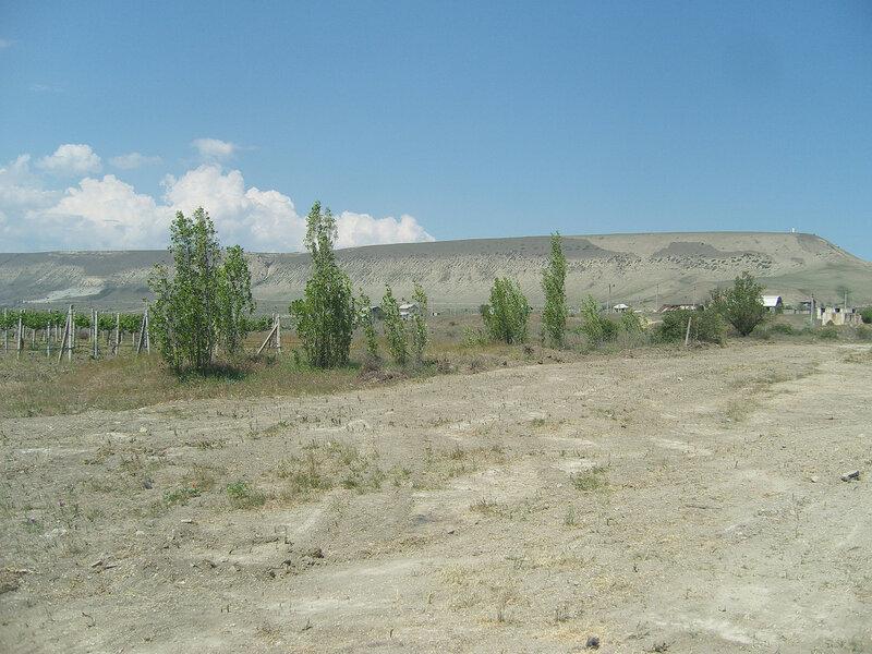 виноградники под горой Клементьева