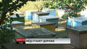 Производители мёда в Молдове говорят о подорожании