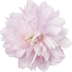 bee_floral_el15.png