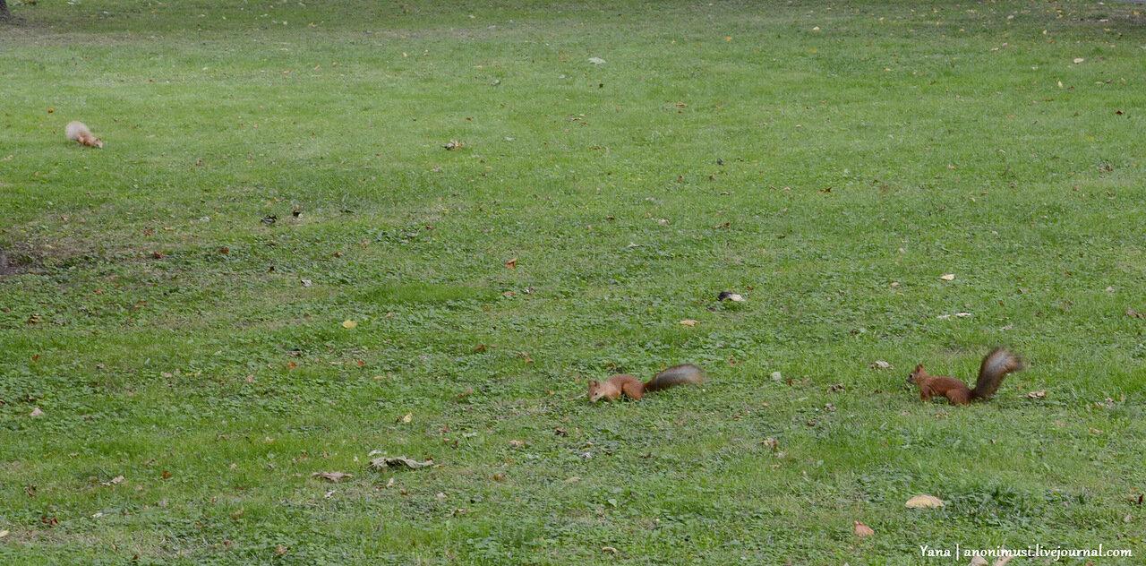 Белки в Гомельском парке