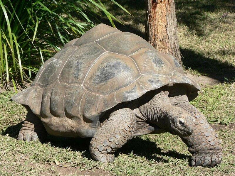 176-летняя Гариетт из зоопарка в Квинсленде (Австралия)