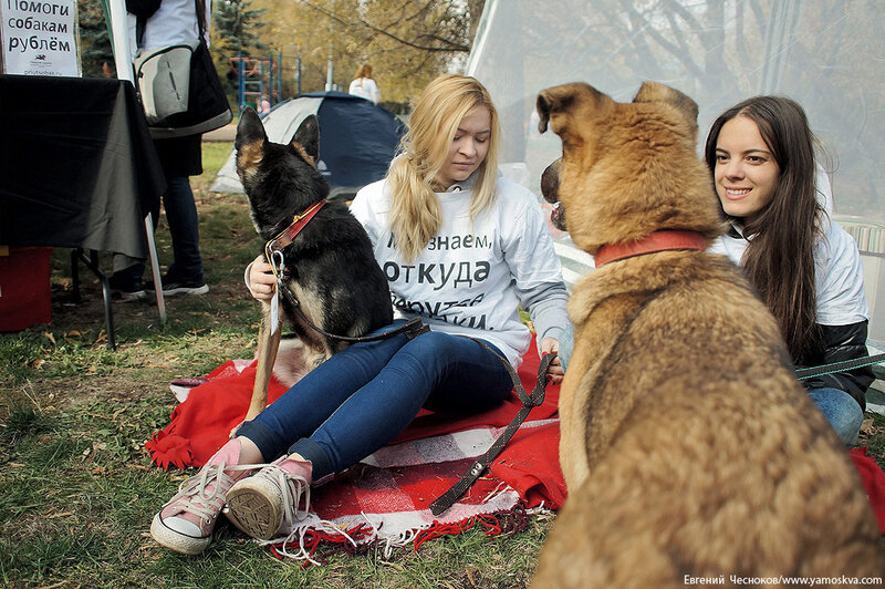 Осень. Фестивальный парк. Собаки. 04.10.14.27..jpg