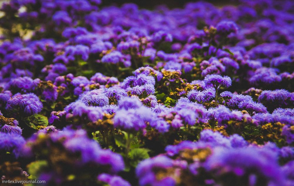 Ботанический парк в Паланге, цветы